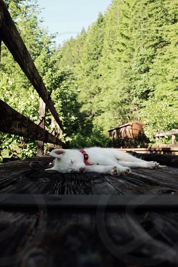 Sleepy dog on the trail  photo