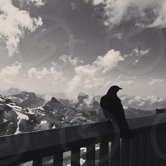 black crow photo