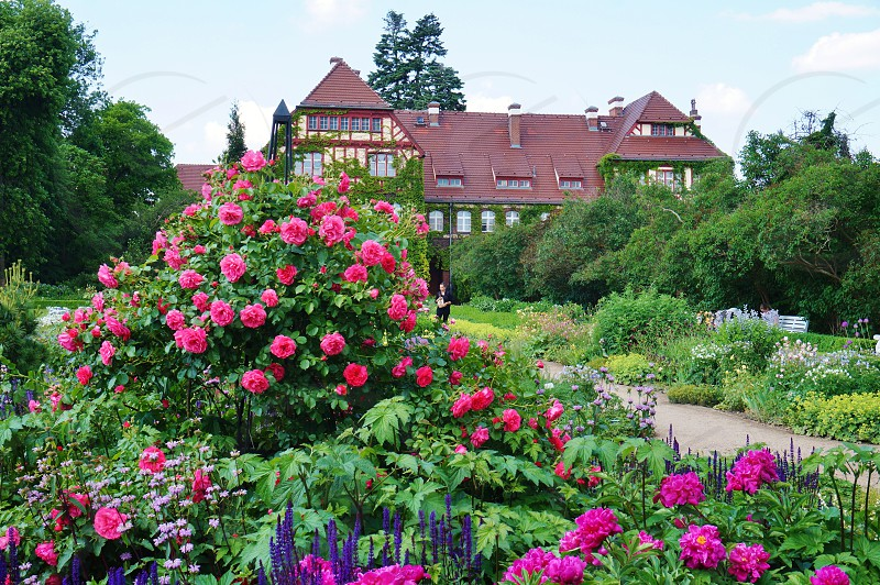The Berlin Dahlem Botanical Garden and Museum in Berlin Germany photo
