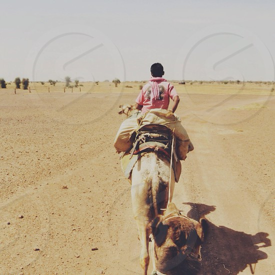 Riding camels through the Thar Desert in India. No joke our camel guide was named Aladdin. photo