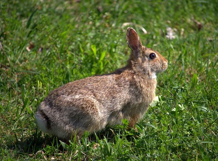 Curious rabbit animals rabbit bunny natural light nature close up  photo
