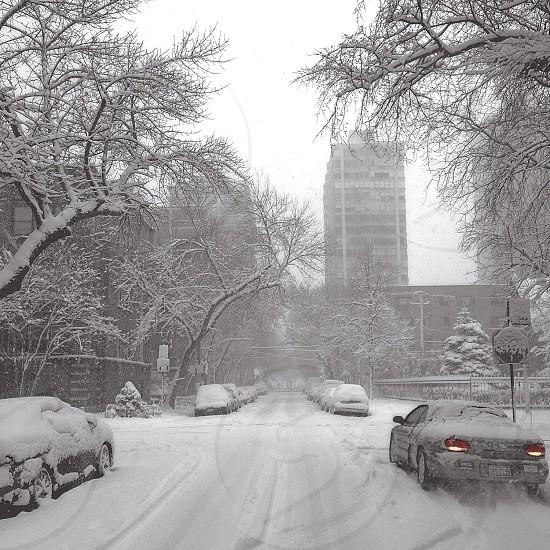 Chicago Winterland photo