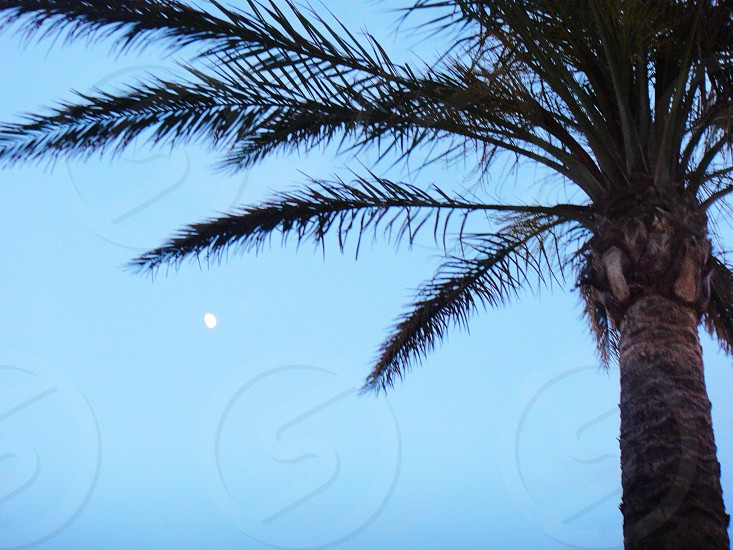 coconut tree with blue background photo