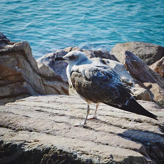 Animals birds photo