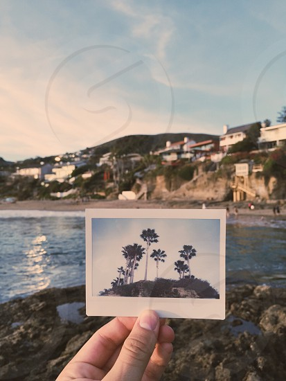 person holding photo of green palm trees on brown field in tilt shift lens photo