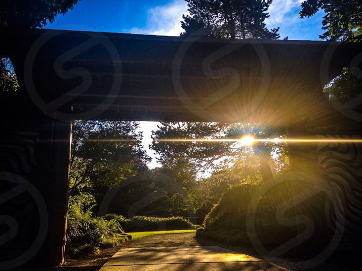 silhouette of tree beside wooden post under clear sky with sunrise view photo