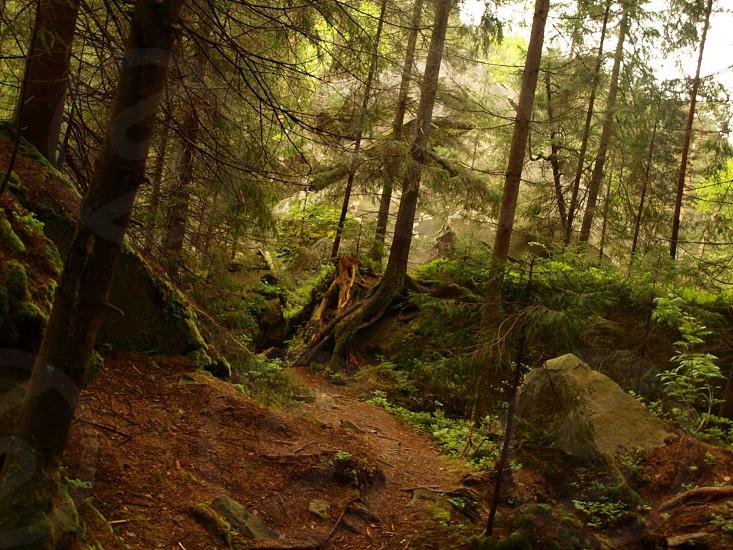 Carpathians. photo