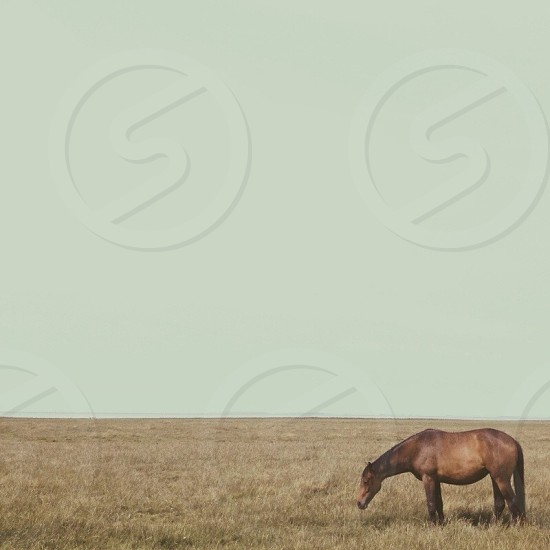 view of brown horse on grass field photo
