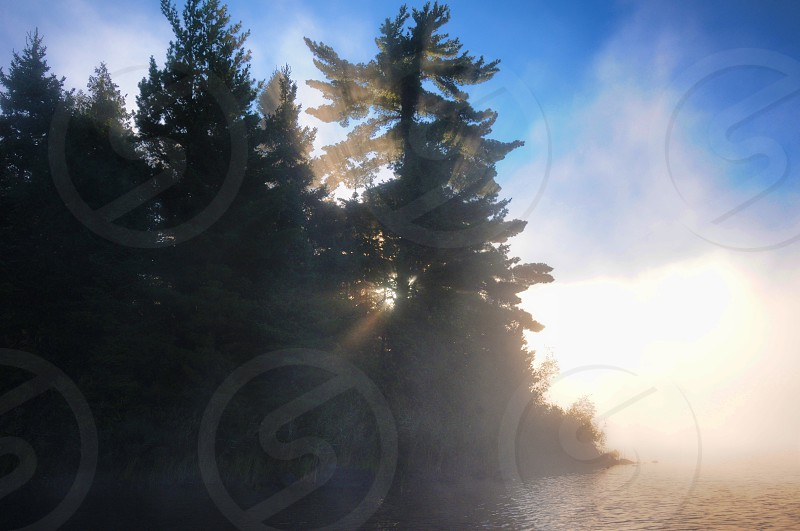Morning mist through pine trees on a northern lake photo