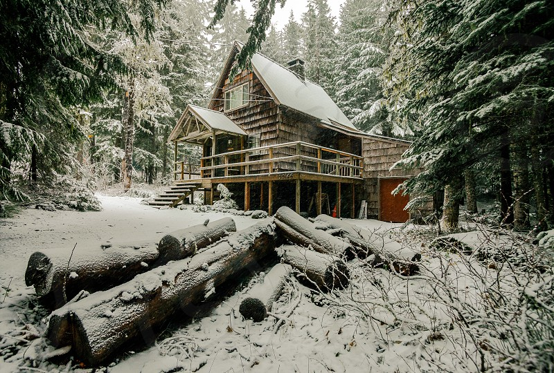 cabin near log woods during winter photo