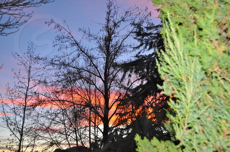 Sunset behind the trees  photo