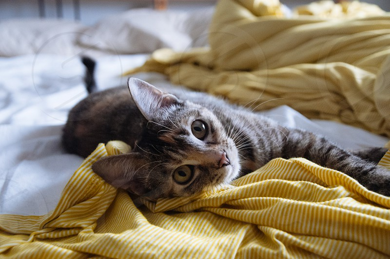 Kitten lying on a bed with a yellow blanket photo