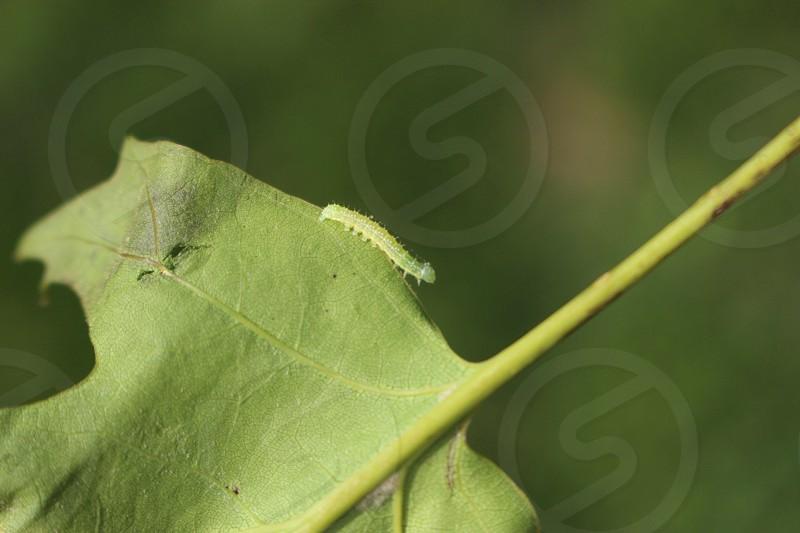green caterpillar on green leaf plant photo