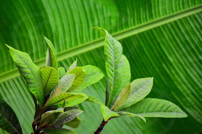 macro shot photography of white leafy plant photo