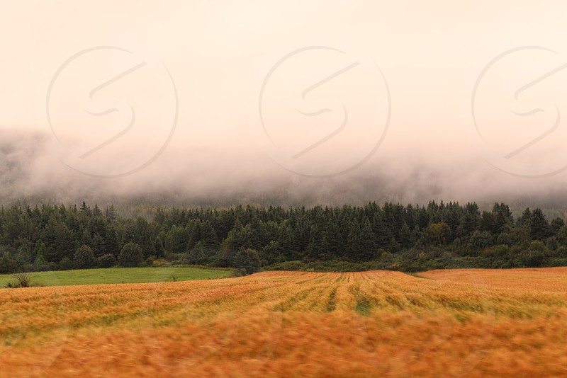 Driving past fog covered fields photo