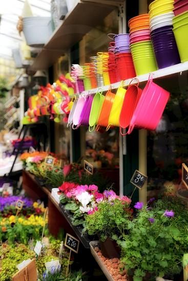 Spring vibrant colorful flowers market Paris  photo