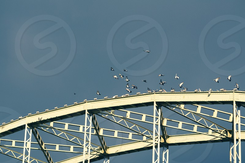 animal arrived background bird blue bridge brown city classic construction dark day dove flying gang gray group lamp landing light nobody old outdoors pigeon pigeons riveted sky steel sunny view wild wildlife wings  photo
