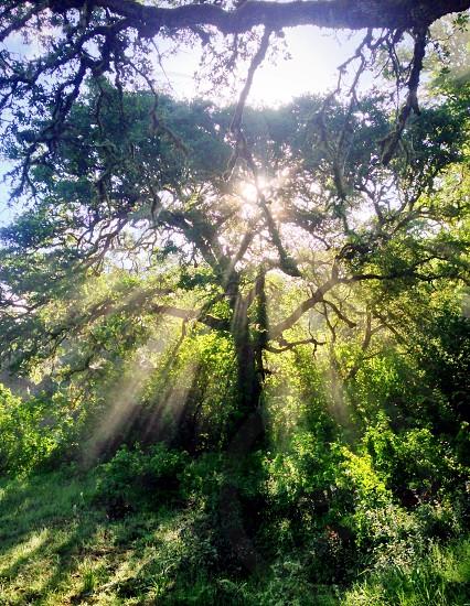sunlight passing through green woods photo
