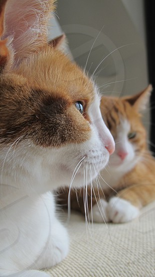 PROFILE PORTRAIT MOTHER AND DAUGHTER ANIMALS CATS photo