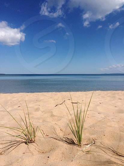 weeds on beach sand photo