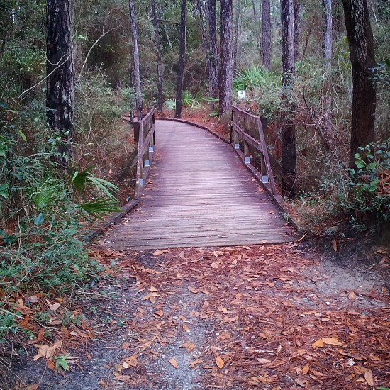 """Follow Me"" #Nature #Trail #Walk #Path #Bird #Sanctuary #Dauphin #Island #Alabama #Trees photo"