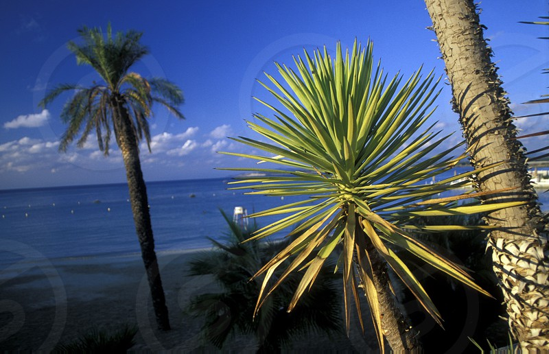 a Beach at the city of Lattakia on the Mediterranean Sea in Syria in the middle east photo