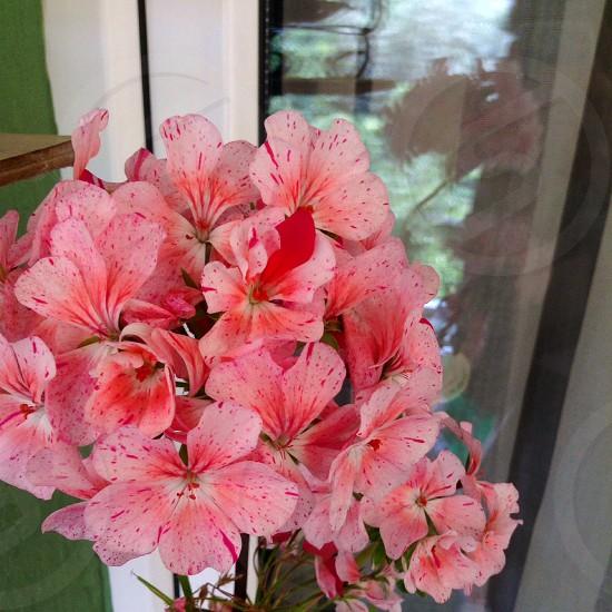 pink flowers on vase photo