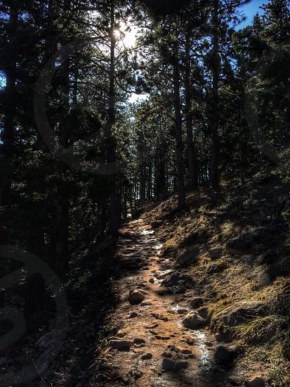 green trees near hill photo