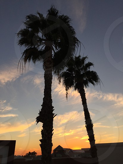 Sunset framed by palm trees  photo