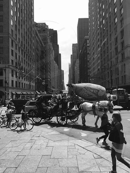 Travel better horse carrier NYC  photo