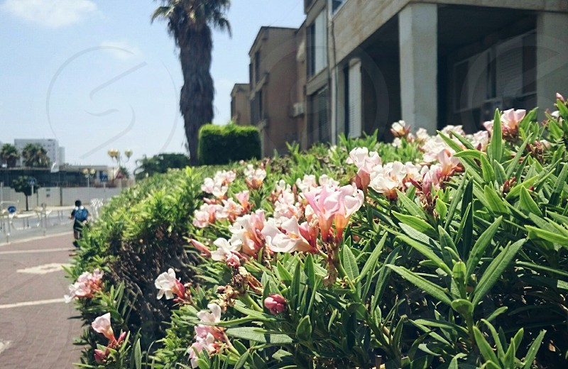 street view shot side pavement plant bush flowers sun day light sunlight may spring visit Israel Nahariya trivial everyday bright kid bicycle beauty moment way home mood photo