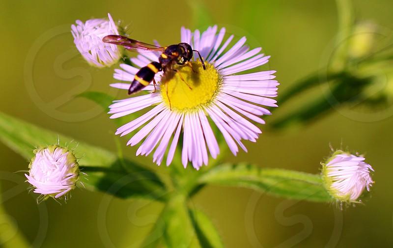 bee on purple petaled flower photo
