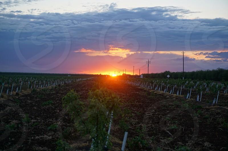 Sunset landscape fields California  photo