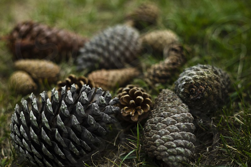 Many different pines cones with different color shades lay down on the grass photo