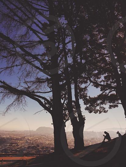person in a tree silhouette photo