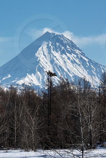 Winter volcanic landscape of Kamchatka Peninsula: view of snow-capped cone of Kamen Volcano (Stone Volcano) scenery winter forest. Russian Far East Kamchatka Region Klyuchevskaya Group of Volcanoes photo