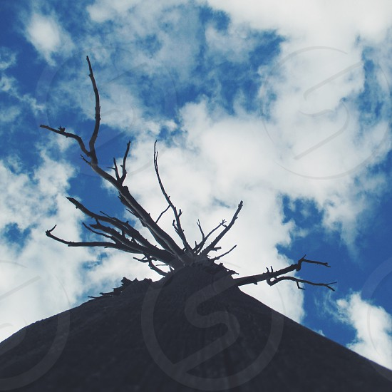 Tree branches Sky clouds eerie scary photo