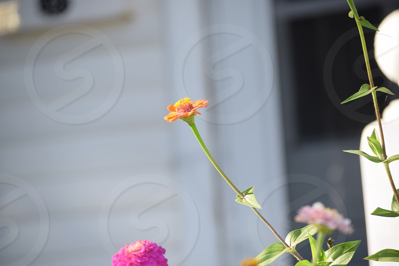 spring colors flowers simply raw mother nature floral love pretty colors simplicity  photo