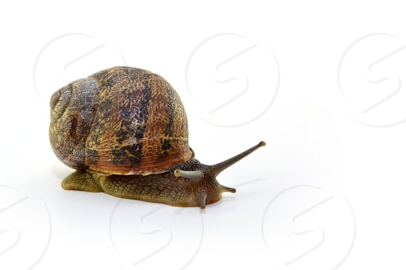 snail animal beauty baba benefits  photo
