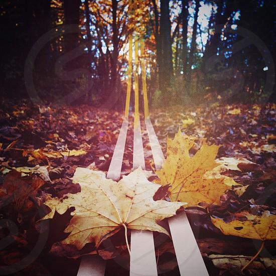 yellow oak leaf photo