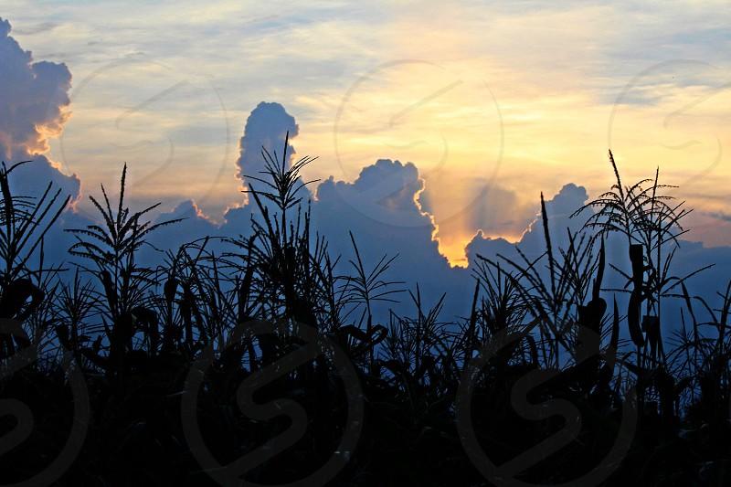 Sunset over cornfield in rural village of Chitwan Nepal.  photo