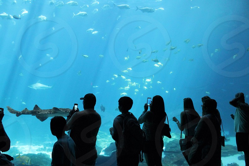 people taking pictures of underwater shark tank photo