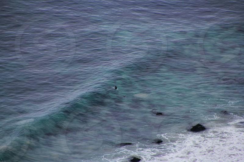 black shark on the sea photo