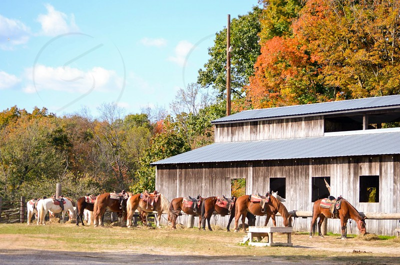 photo of brown and white horses lined beside brown building photo