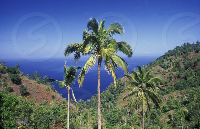 the mountain Landscape on the Island of Anjouan on the Comoros Ilands in the Indian Ocean in Africa.    photo