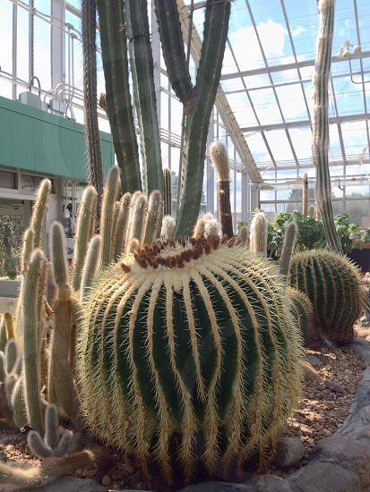 photo of green cacti photo