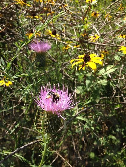 Flowers bee photo