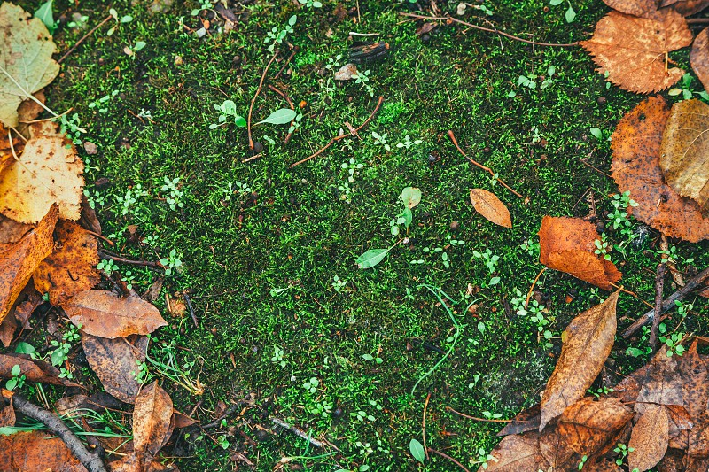Dry leaves on the grass ground in a beautiful autumn forest photo