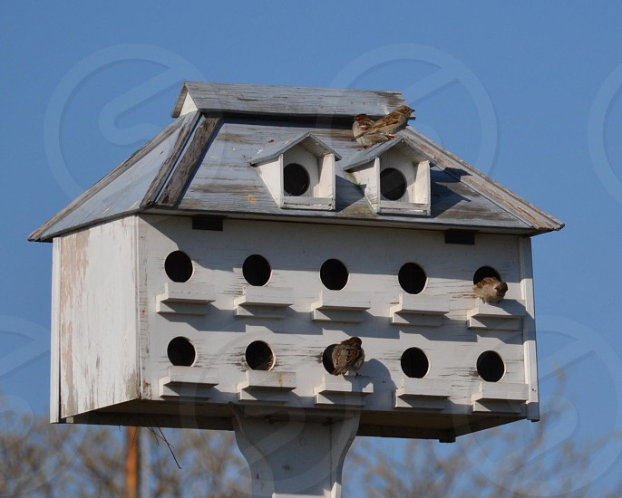 three brown bird on grey wooden bird house photo