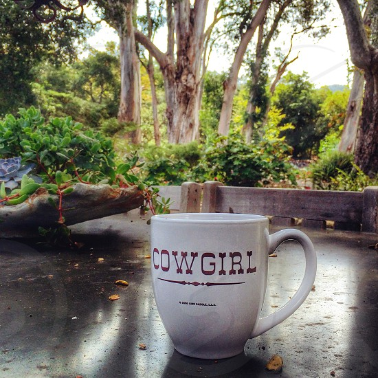 Coffee with a view in the woods.  photo
